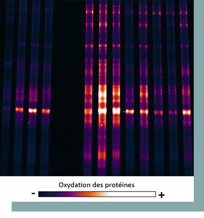Analyse-oxydation-proteines-apidiag